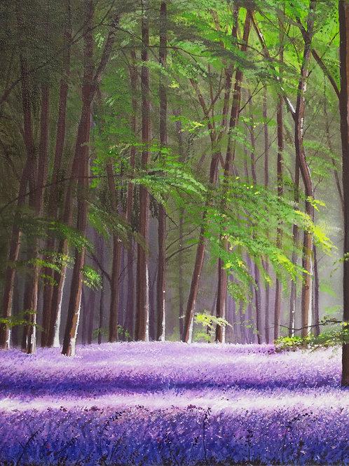 Forest Bluebells  (18x14)