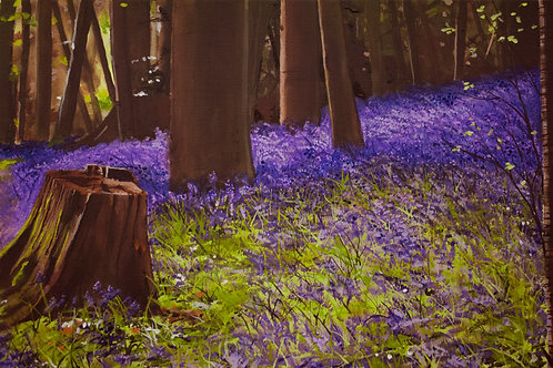 Bluebells in a Beech Grove  (14x21)