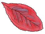 2019-10-Autumn-leaves-Red-Alt.jpg