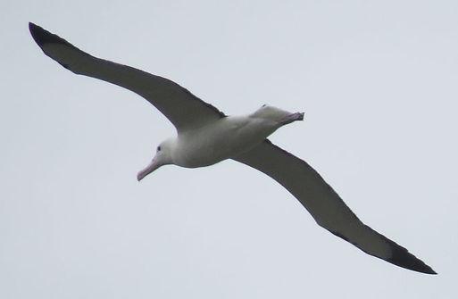 Albatross2_edited.jpg