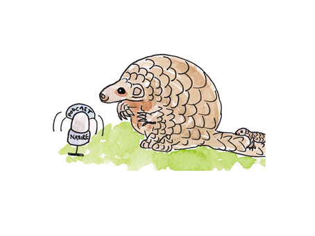 Good news for Pangolins and other Wildlife!