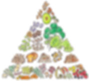 2019-03-Food-pyramid-Without-Text-40-per