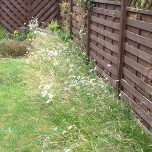 7-Wildflower-meadow-reduced.jpg