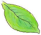2019-10-Green-Leaf.jpg