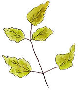 2019-10-Leaves.jpg