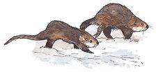 2018-12-Yellowstone-Otters.jpg
