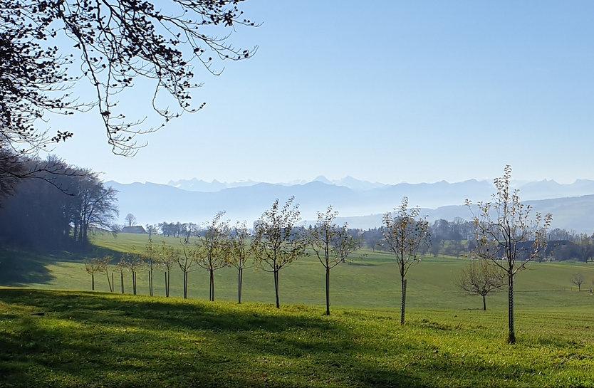 Natur in der Schweiz.jpg