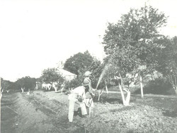 Three acres of Orchard