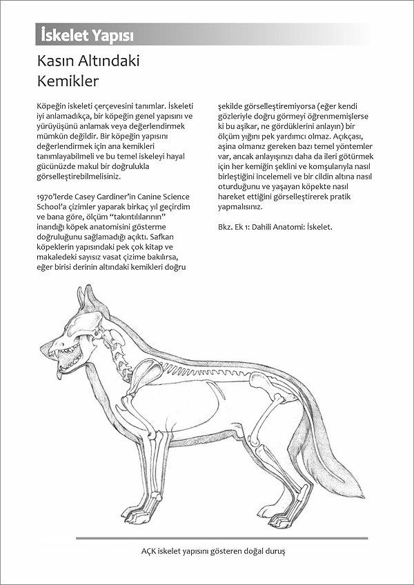 Çizimlerle Alman Çoban Köpeği13.jpg