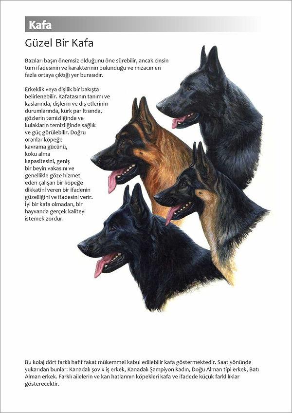 Çizimlerle Alman Çoban Köpeği25.jpg