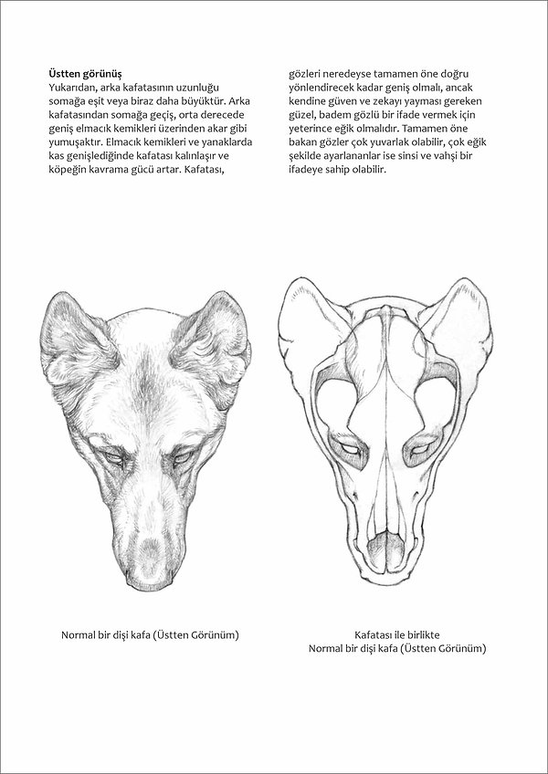 Çizimlerle Alman Çoban Köpeği30.jpg