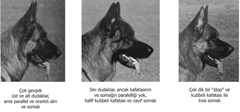kafa5.jpg