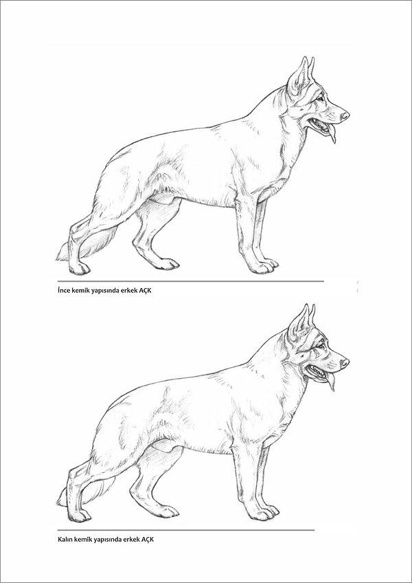 Çizimlerle Alman Çoban Köpeği18.jpg