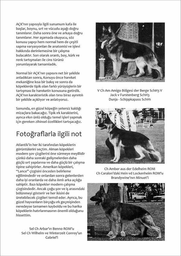 Çizimlerle Alman Çoban Köpeği06.jpg