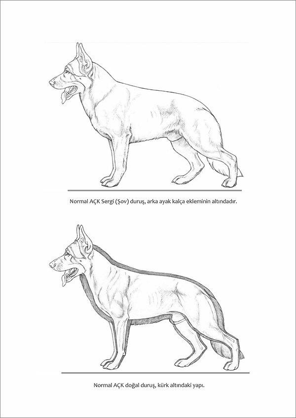 Çizimlerle Alman Çoban Köpeği12.jpg