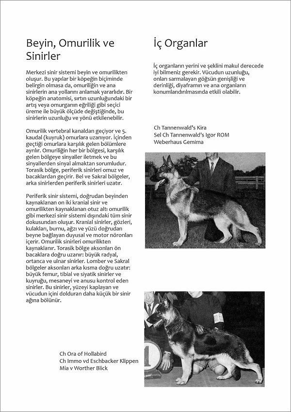 Çizimlerle Alman Çoban Köpeği24.jpg