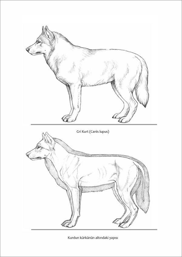 Çizimlerle Alman Çoban Köpeği08.jpg