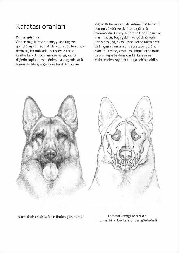 Çizimlerle Alman Çoban Köpeği27.jpg
