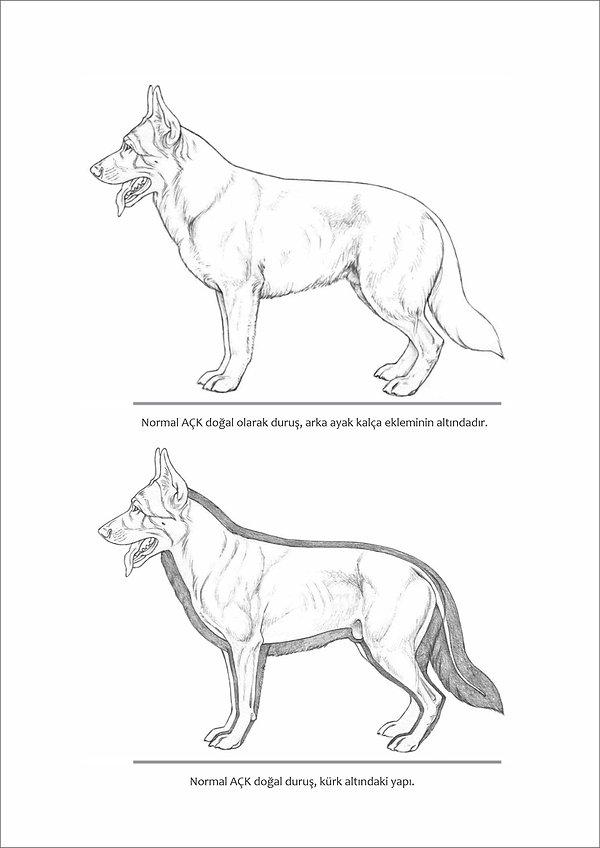 Çizimlerle Alman Çoban Köpeği11.jpg