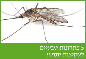 פתרונות טבעיים לעקיצת יתושים