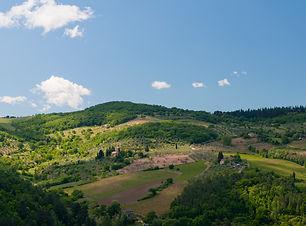View_from_Villa_Vignamaggio_(5771965060)