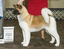 GCH Quantum's Turn To Stone
