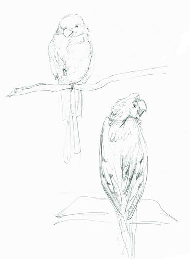 Parrots.png