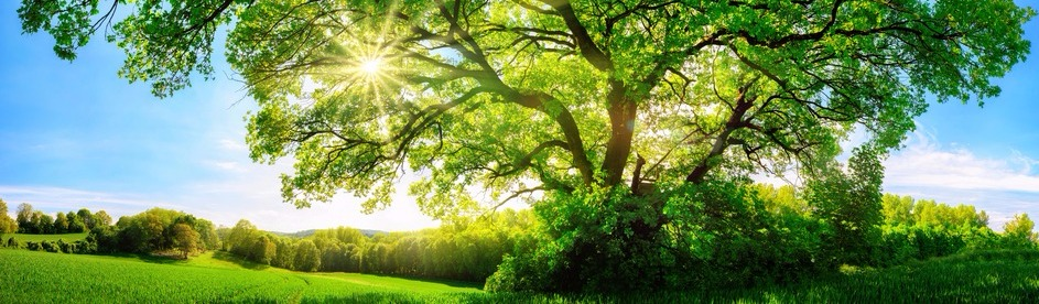 Rae of Light Wellness