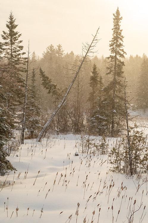 Winter Rising
