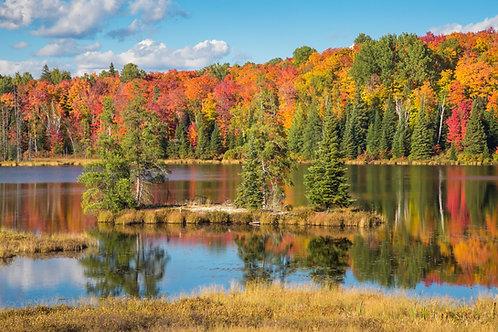 Algonquin Autumn
