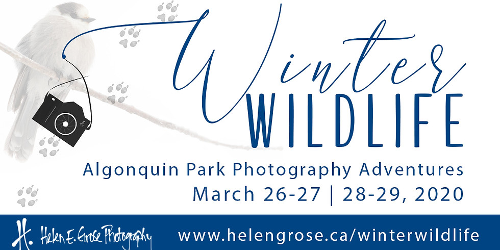 Winter Wildlife Photography Adventure *Cancelled & Refunded*