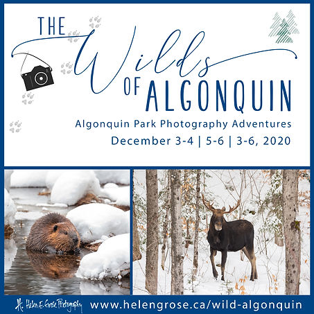 The Wilds of Algonquin 2020.jpg