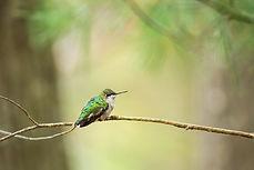 Little Green - website - Copyright Helen