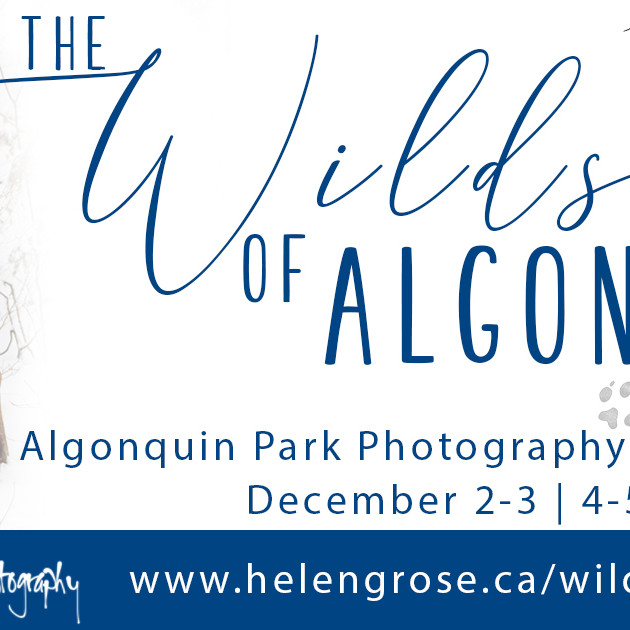 The Wilds of Algonquin Photography Adventure
