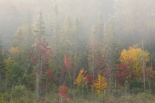 Autumn Silence