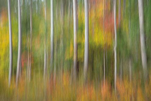 Autumn Blur Greeting Card