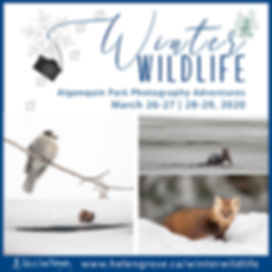 Winter Wildlife Photography Tour 2020.jp