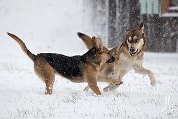 Candid pet photos | Muskoka | Helen E. Grose