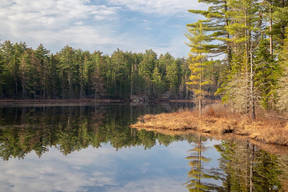 Mew Lake Algonquin Provincial Park