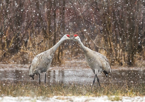 Sandhills in Love Greeting Card
