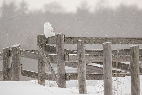 Farm Snowy