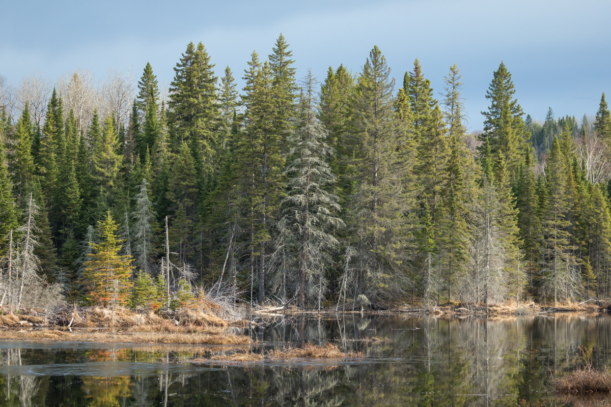 Spring in the Boreal