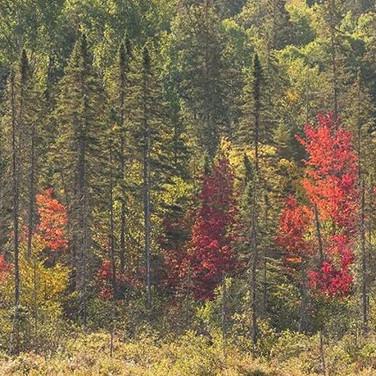 Autumn | Nature Photography Tour | Algonquin Park