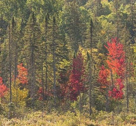 Autumn   Nature Photography Tour   Algonquin Park