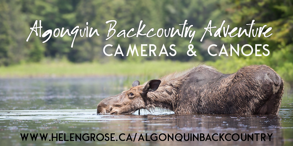 Algonquin Backcountry Adventure: Cameras and Canoes (October 8)