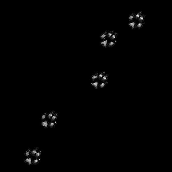 Footprints_edited_edited_edited.png