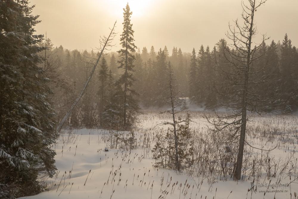 Snowstorm Sunrise