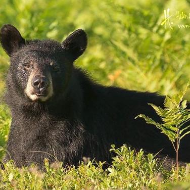 Wildlife Photography Tour | Helen E. Grose