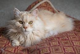 Muskoka Pet Photography | Helen E. Grose