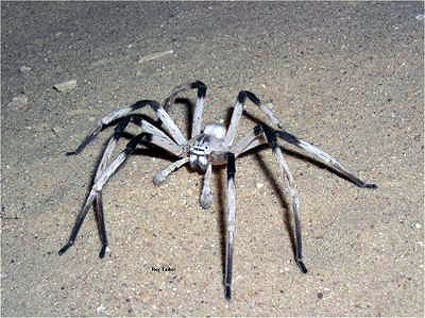 The Spider That Ate My Brain
